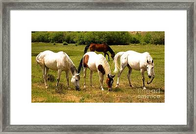 Line Dancing At The Coral Framed Print by Claudette Bujold-Poirier