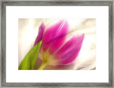 Linen Tulip Framed Print by Bobbi Feasel