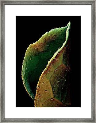Liquorice Leaf Framed Print by Stefan Diller