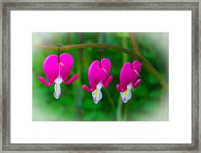 Bleeding Hearts Framed Print by Martin Newman