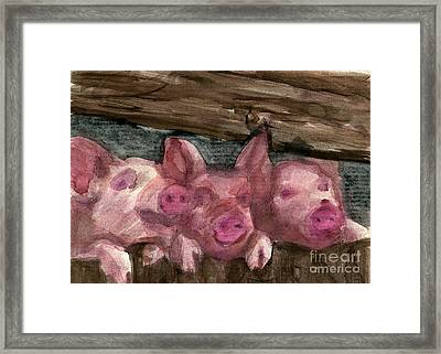 3 Little Pigs Framed Print by Sandra Stone