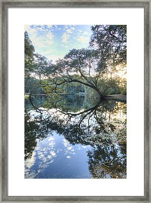 Live Oak Reflections Framed Print by Dustin K Ryan