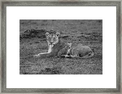 Mama's Little Baby Framed Print