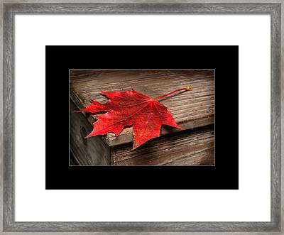 Maple Leafs  Framed Print by Tommytechno Sweden