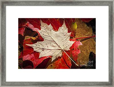 Maple Leaves In Water Framed Print by Elena Elisseeva