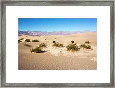Mesquite Flat Sand Dunes Framed Print by Ashley Cooper