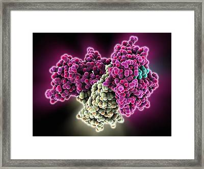 Mhc Protein-antigen Complex Framed Print by Science Photo Library