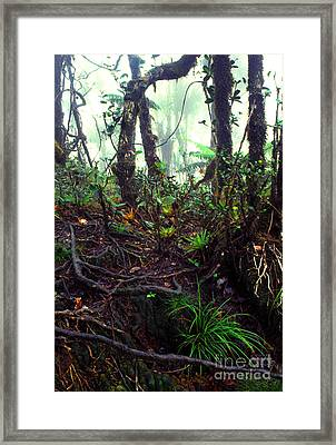 Misty Rainforest El Yunque Framed Print by Thomas R Fletcher