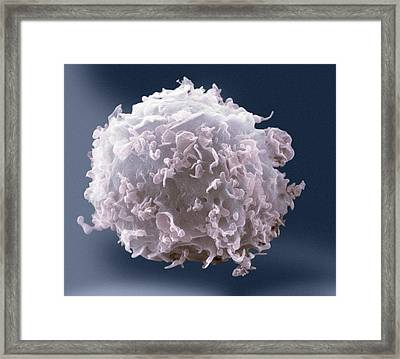 Monocyte White Blood Cell Framed Print by Nibsc