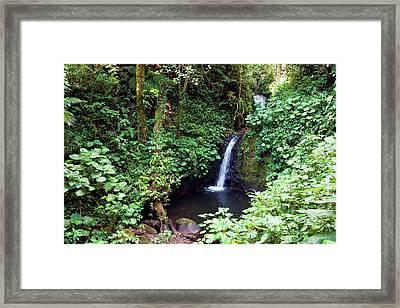 Monteverde Cloud Forest Reserve, Costa Framed Print by Susan Degginger