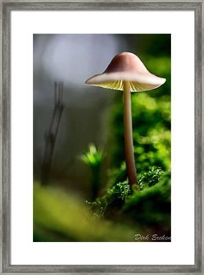 Mushroom Mycena Galericulata Framed Print by Dirk Ercken