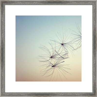 Nature Abstract Framed Print by Sabina  Horvat