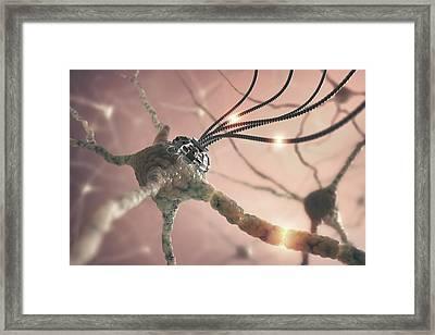 Nerve Cell Network Framed Print