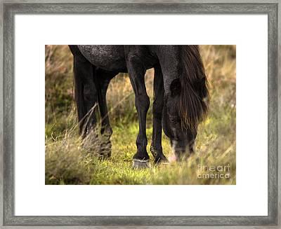 New Forest Pony Framed Print by Angel  Tarantella