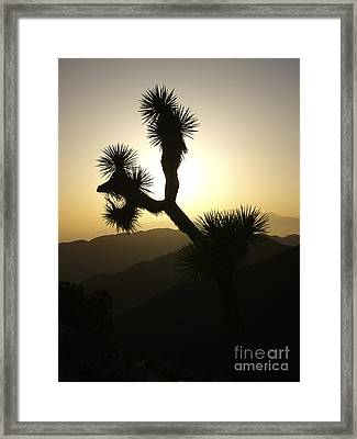 New Photographic Art Print For Sale Joshua Tree At Sunset Framed Print