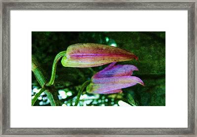 Orchid-dendrobium Buds Framed Print