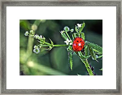 Out On A Limb Framed Print by JC Findley