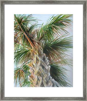 Palmetto 2011 Framed Print
