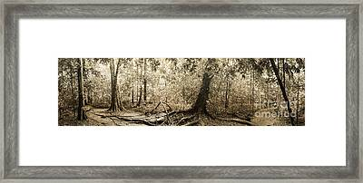 Panorama Of Rainforest Framed Print