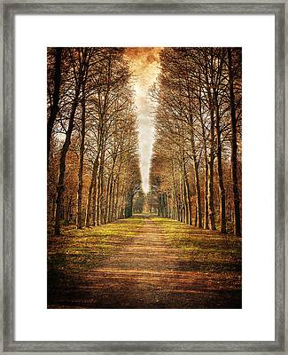 Framed Print featuring the photograph Path In The Woods / Versailles by Barry O Carroll