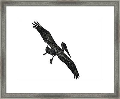 Pelican Selection Framed Print