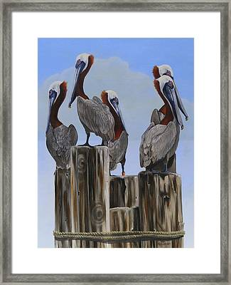 Pelicans Five Framed Print by Phyllis Beiser