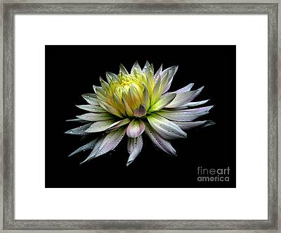 Perfection Framed Print by Irina Hays