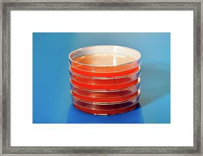 Petri Dishes Framed Print