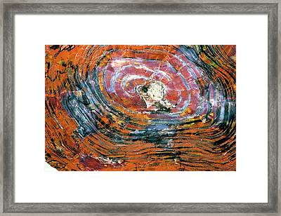Petrified Wood Framed Print by Dirk Wiersma
