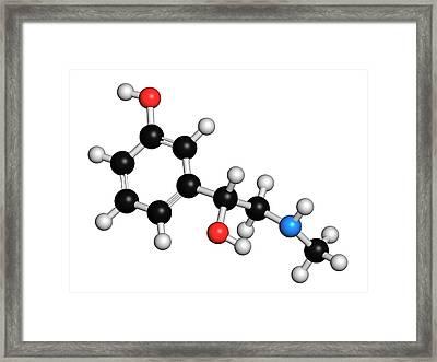 Phenylephrine Decongestant Drug Molecule Framed Print