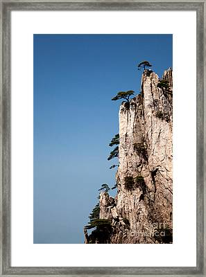 Pine Trees On Huangshan Mountain China Framed Print