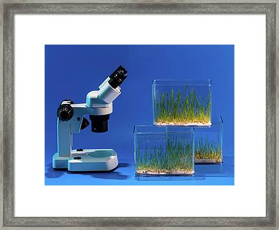 Plants Growing In Containers Framed Print by Wladimir Bulgar