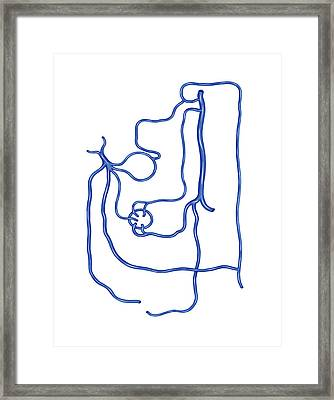 Portal Vein Network Framed Print by Asklepios Medical Atlas