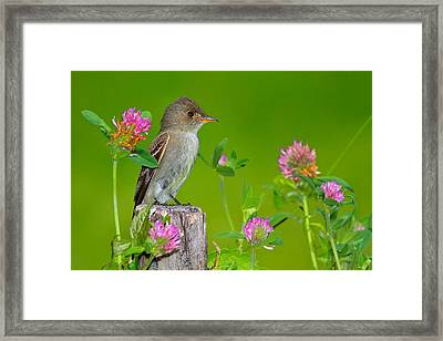 Pretty In Pink 2 Framed Print by John Absher