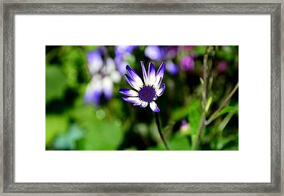 Purple Flower Framed Print by Barbara Walsh