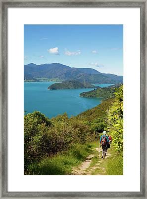 Queen Charlotte Track, Marlborough Framed Print by Douglas Peebles