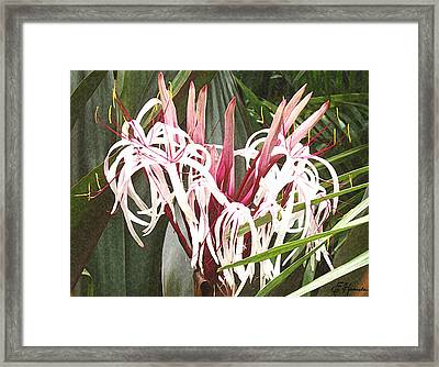 Queen Emma Crinum Lilies Framed Print by Ellen Henneke