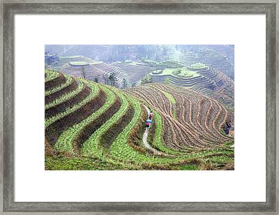 Rice Terraces Framed Print by King Wu