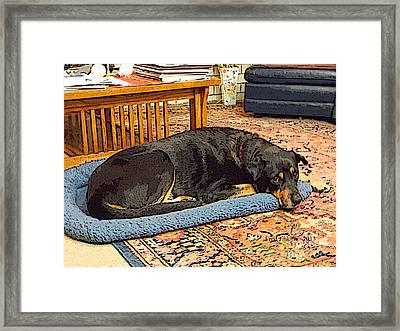Rocky Portrait  Framed Print