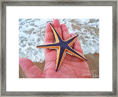 Royal Starfish - Ormond Beach Florida Framed Print by Melissa Sherbon
