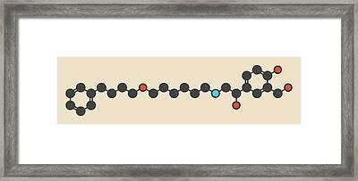 Salmeterol Asthma Drug Molecule Framed Print