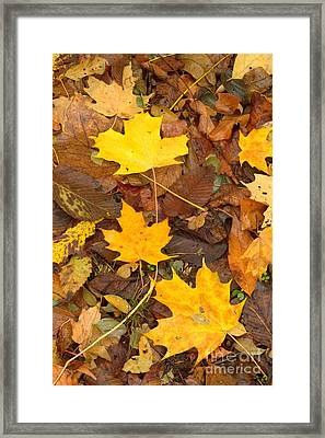 Framed Print featuring the photograph 3 Shades Of Yellow by Jim McCain
