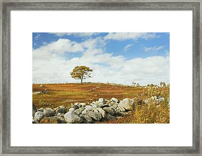 Single Tree And Rock Wall In Maine Blueberry Field Framed Print