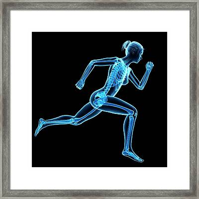 Skeletal System Of Jogger Framed Print