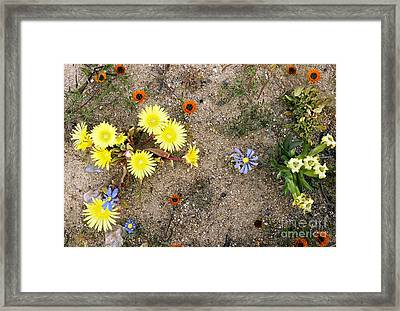 Skilpad Nature Reserve, South Africa Framed Print by Bob Gibbons