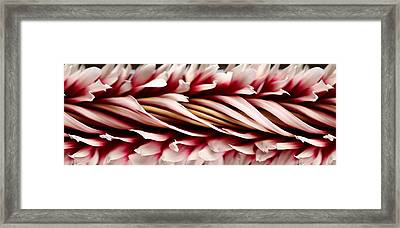 Slit-scan Image Of Dahlia Flower Framed Print