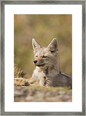 South America, Chile, Torres Del Paine Framed Print by Jaynes Gallery