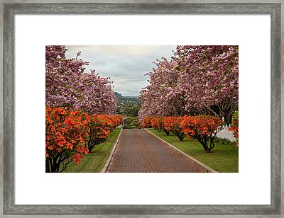 South Pacific, New Zealand, North Island Framed Print