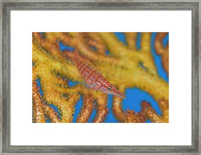 South Pacific, Solomon Islands Framed Print