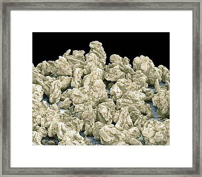 Splenda Artificial Sweetener, Sem Framed Print by Thomas Deerinck, NCMIR